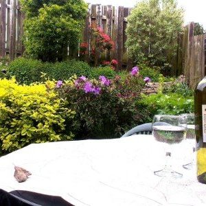 Garden with map and wine